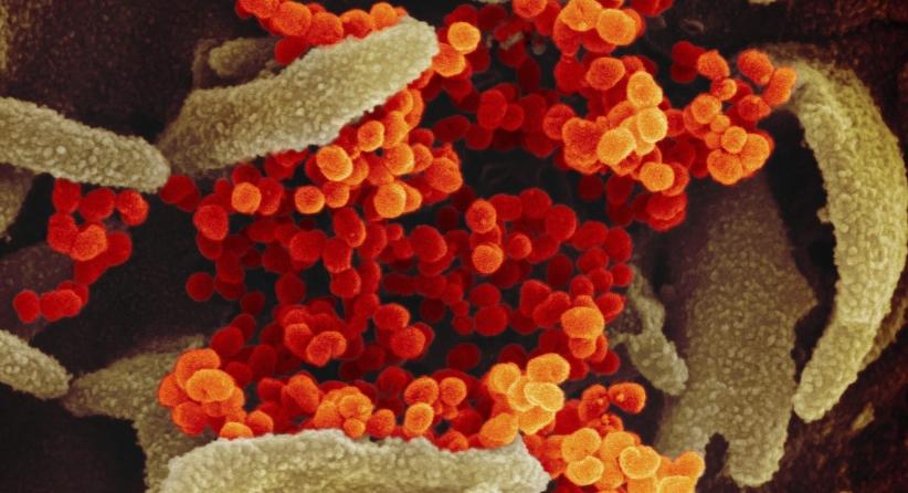 لا إصابات جديدة بالفيروس في مانيتوبا لليوم