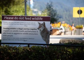 إلقاء القبض على شخصين بسبب إطعامهما الذئاب في إحدى حدائق فانكوفر