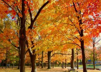 توقعات الطقس خلال فصل الخريف في مونتريال